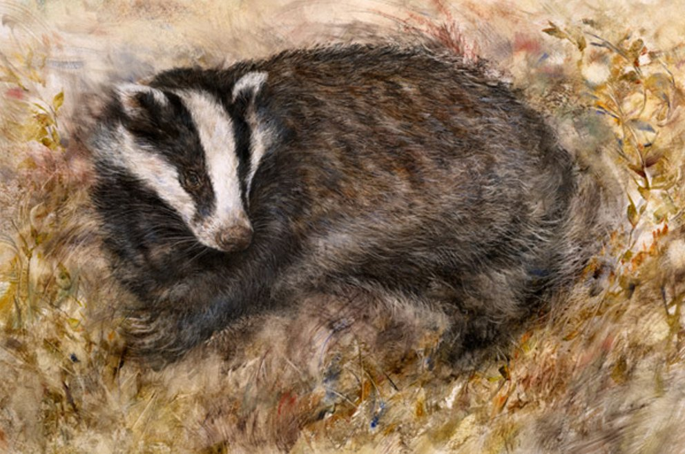 Badger's Rest by Gary Benfield