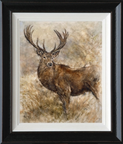 Majestic Stag framed by Gary Benfield