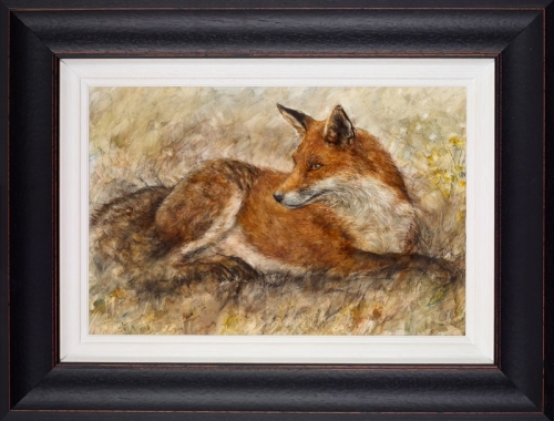 Red Fox Waiting framed by Gary Benfield
