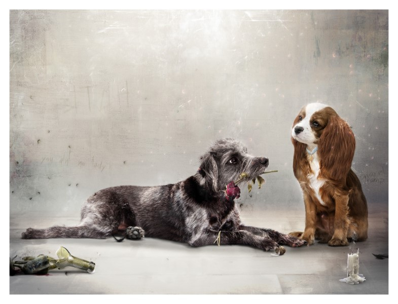 I'd Give My Last Meatball (Lady & The Tramp) - Large by Mark Davies