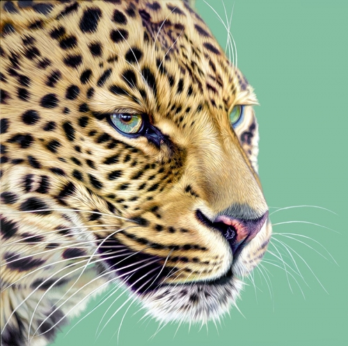 Game Face by Darryn Eggleton